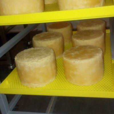 Лотки с сыром качетта в стеллаже