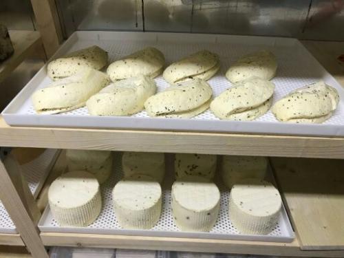 Применение лотка на производстве сыра Халлуми
