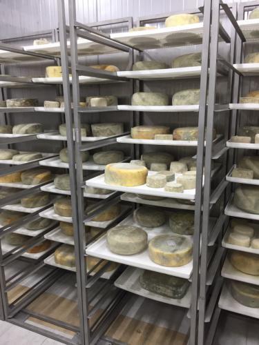 Пластиковый лоток для хранения сыра