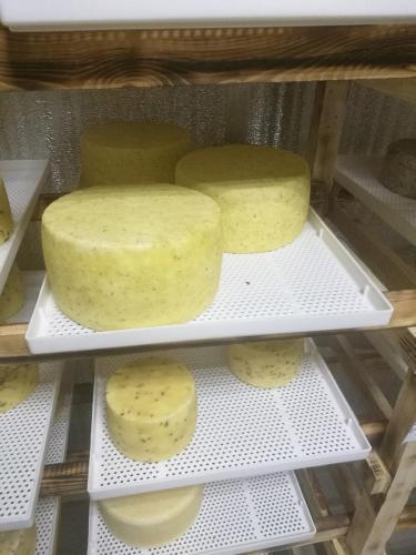 Применение лотка на сырном производстве