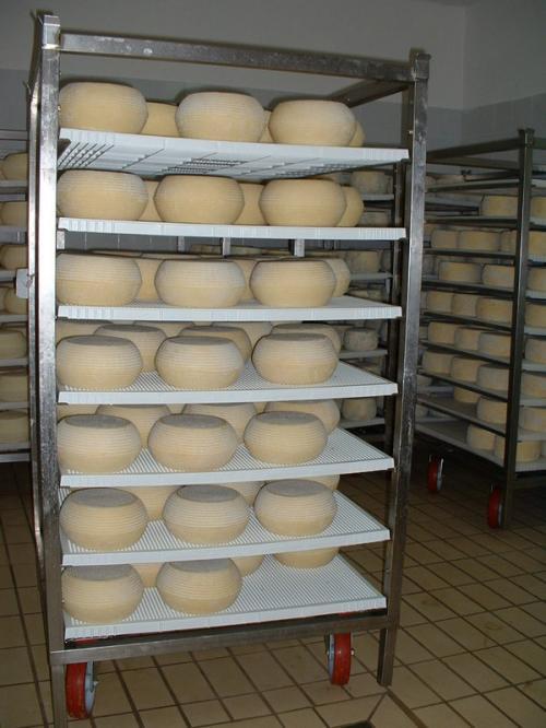 Сыр на вызревании